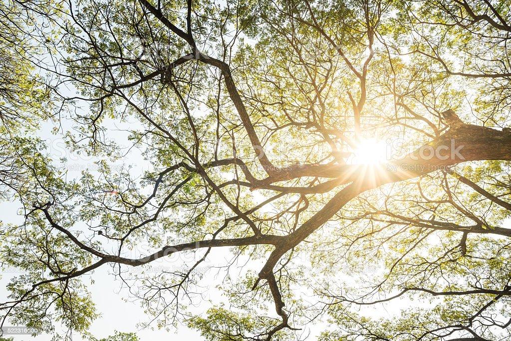 Sun shining through the branches stock photo