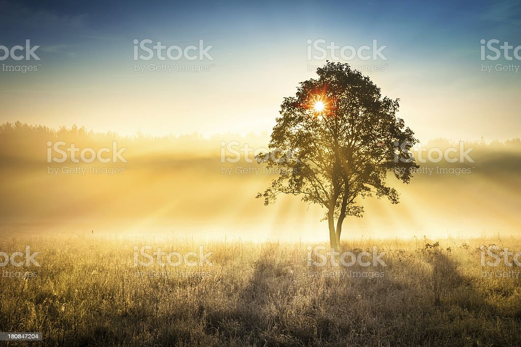 Sun Shining through the Tree - Foggy Sunrise Landscape stock photo