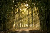 sun shining through the trees on a sand path