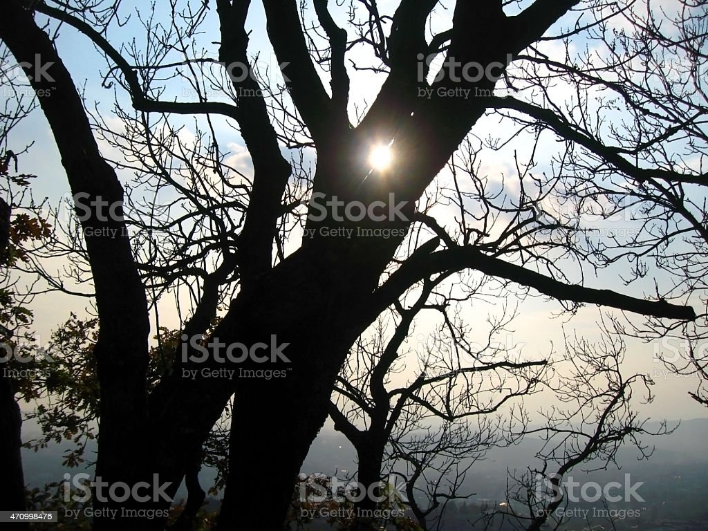Sun shining through the trees stock photo