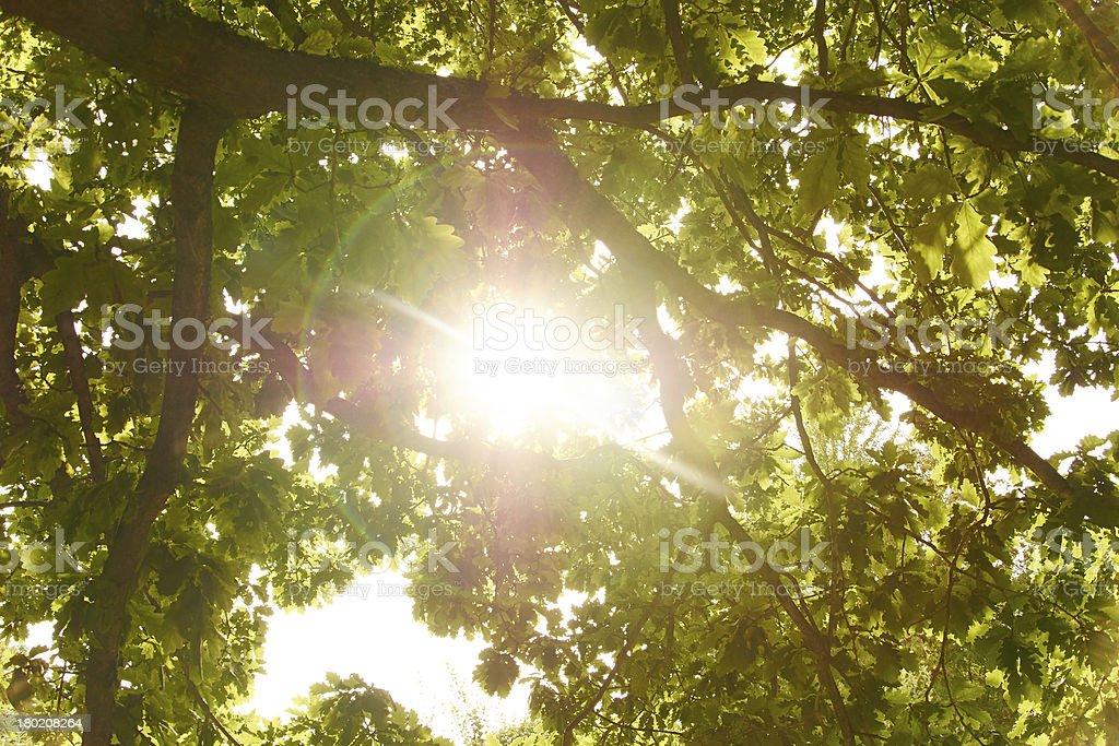 sun shining through tree stock photo