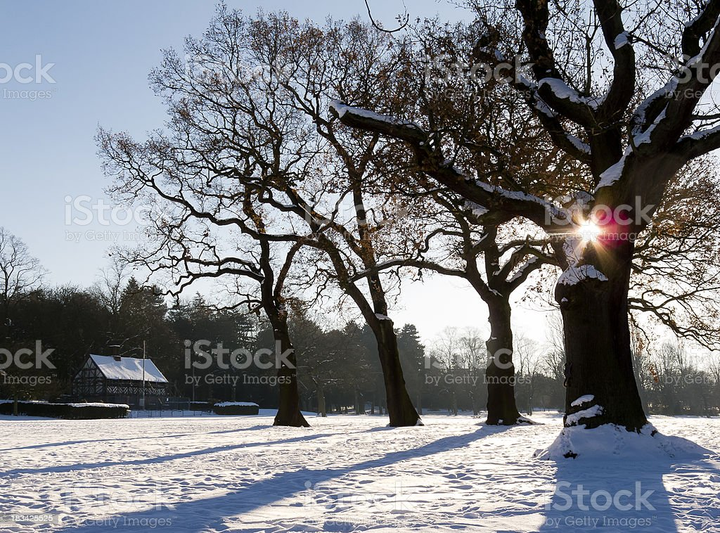 Sun shining through trees in the snow stock photo