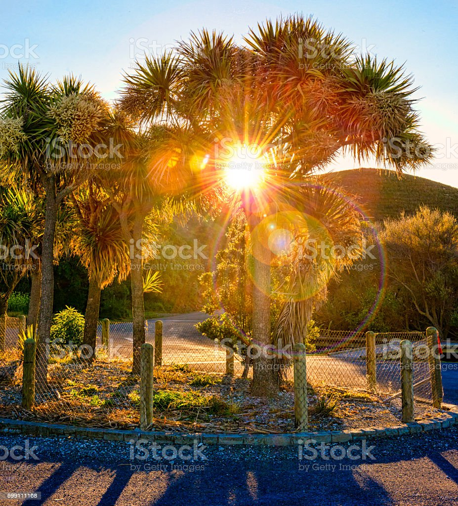 Sun through a tree with flare stock photo