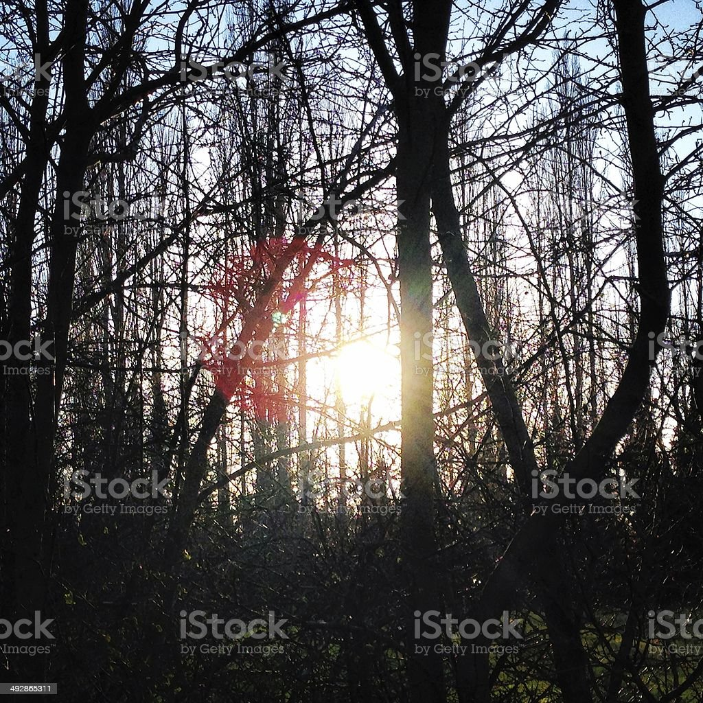 Sun through the thicket. royalty-free stock photo