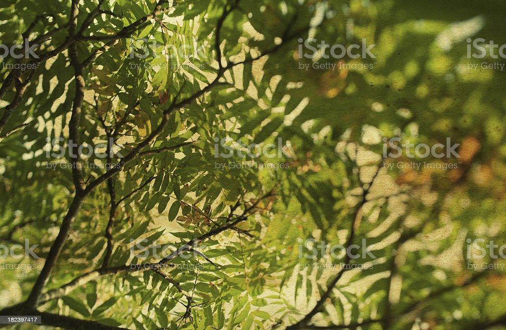 Sun through the trees royalty-free stock photo