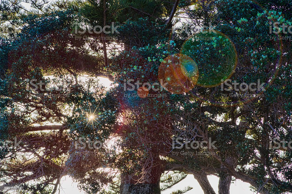 Sun through trees with flare stock photo