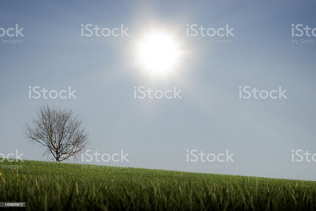 Sunbathing Tree royalty-free stock photo