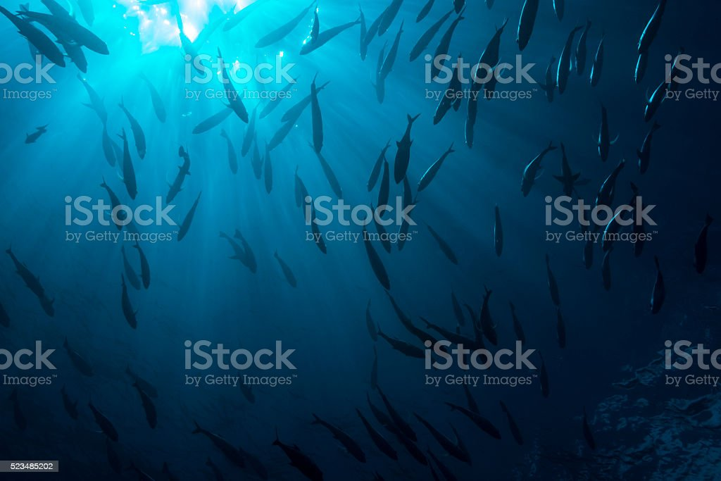 Sunbeam and Fish - Palau, Micronesia stock photo