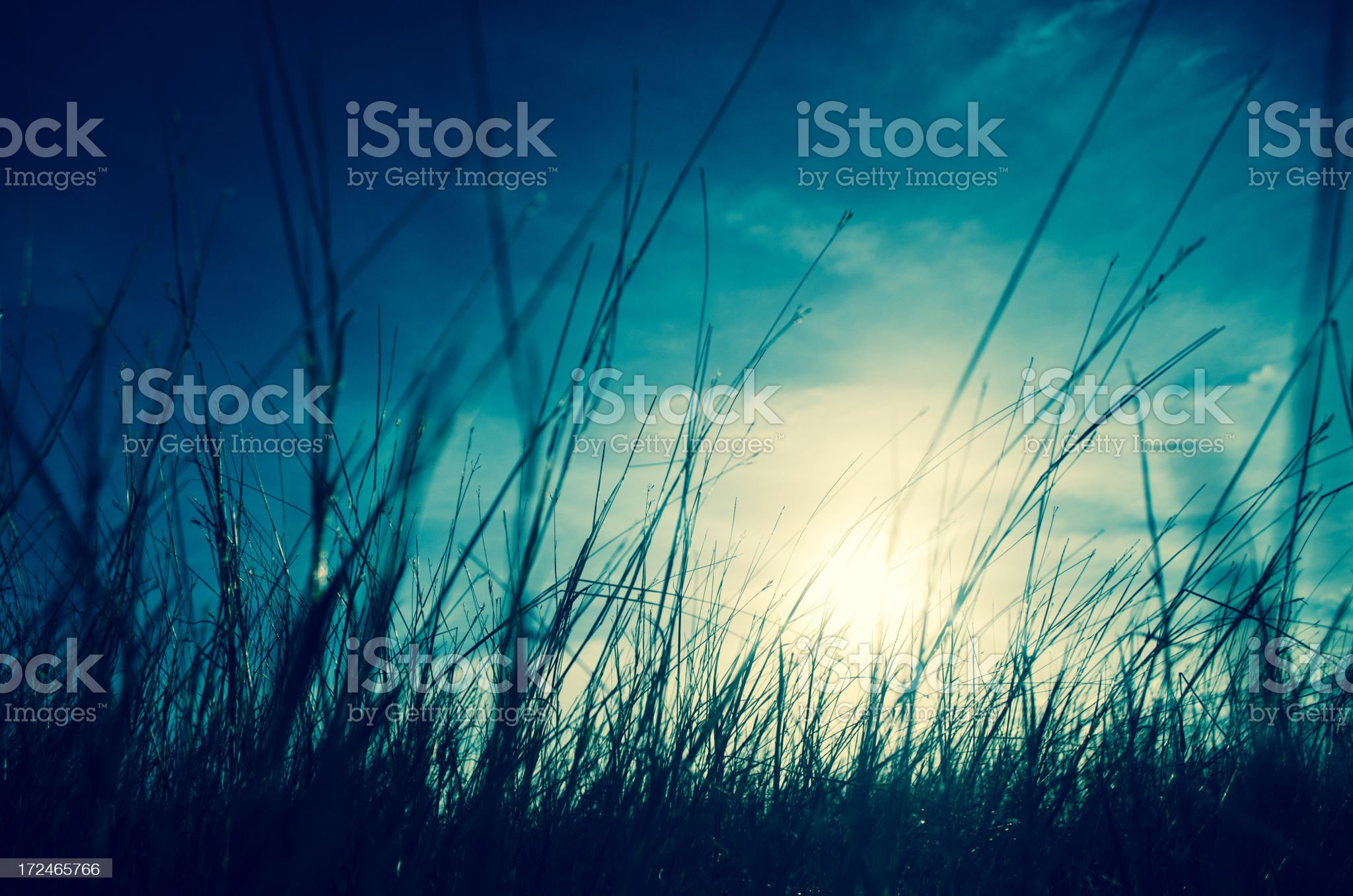 sunbeam and grass silhouette royalty-free stock photo