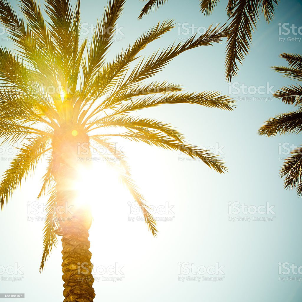 Sunbeam coming through palm tree leaves stock photo