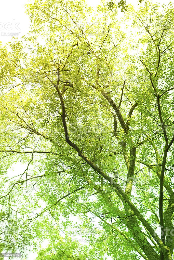 Sunbeam coming through tree branches royalty-free stock photo