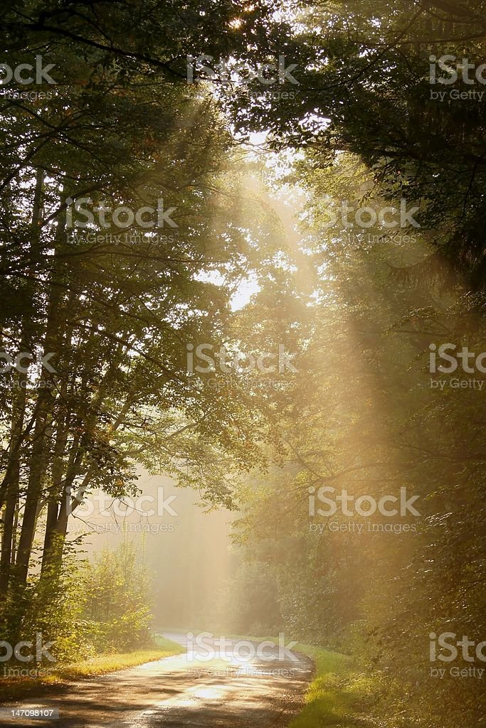 Sunbeam falls on the country road in a misty forest stock photo