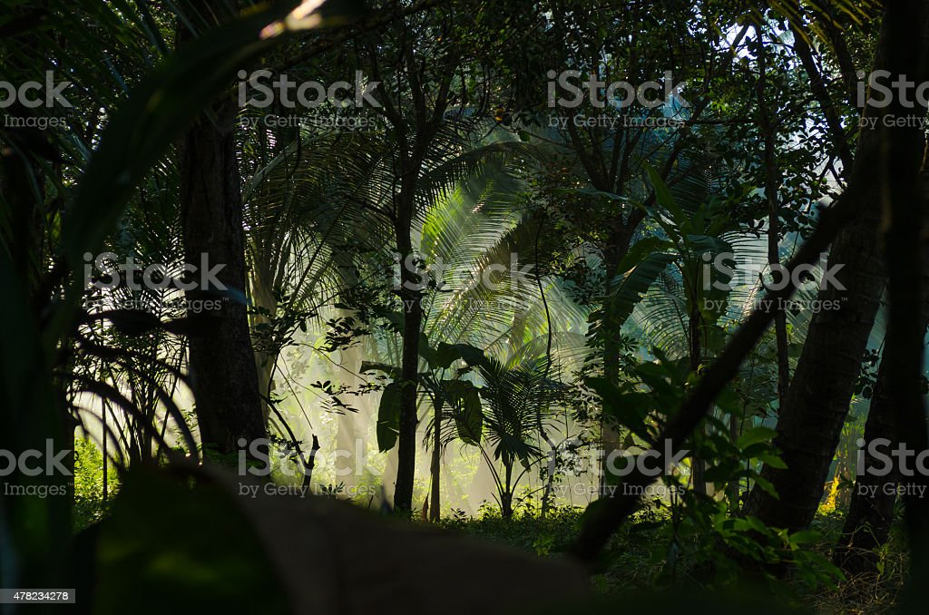 sunbeam in dark jungle with fog and palms stock photo