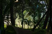 sunbeam in dark jungle with fog and palms