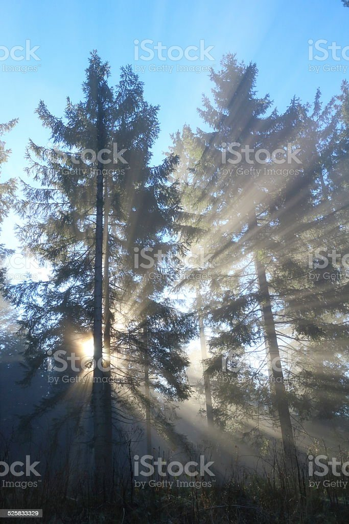 sunbeam in forest stock photo