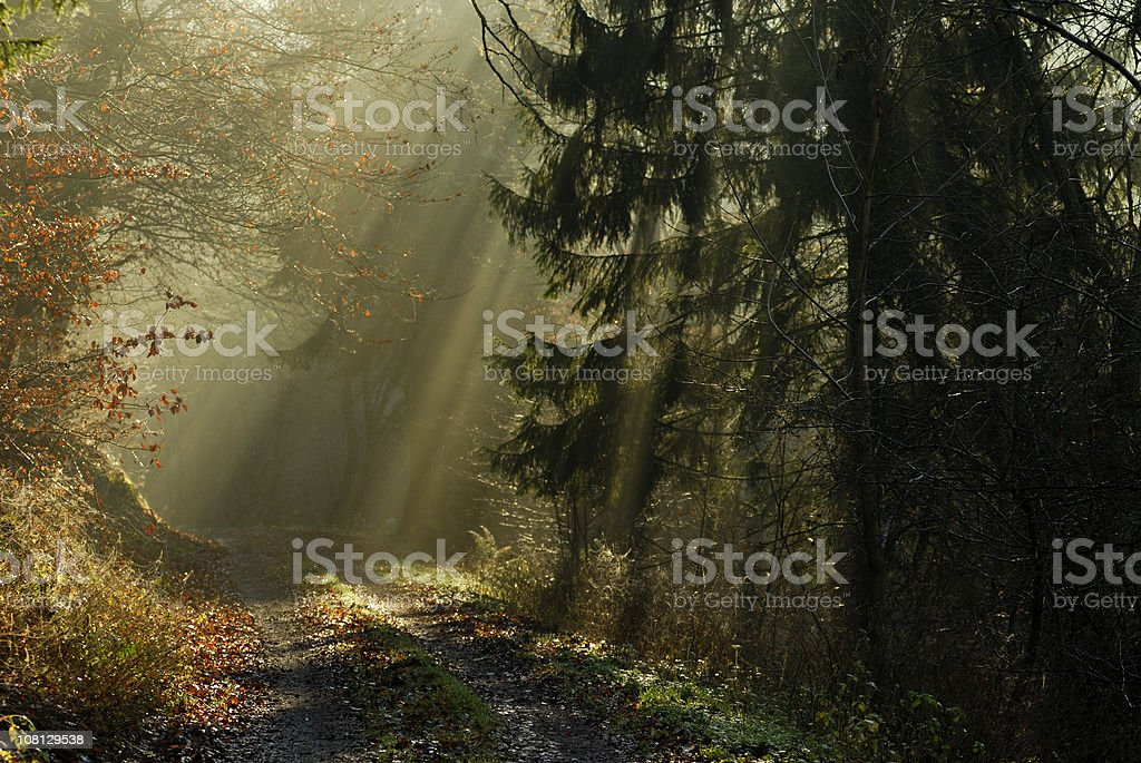 Sunbeams Coming Through Forest On To Path royalty-free stock photo