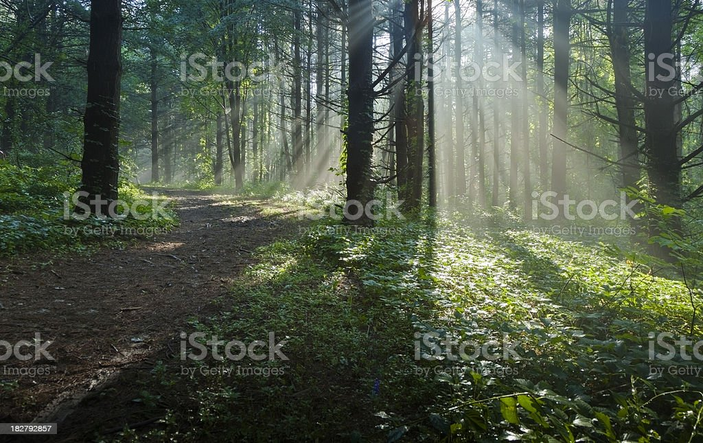 Sunbeams Filtering Through Mist on a Forest Trail royalty-free stock photo