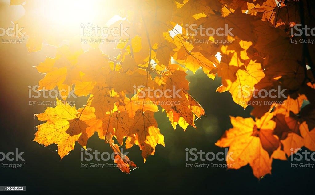 Sunbeams in a treetop. stock photo