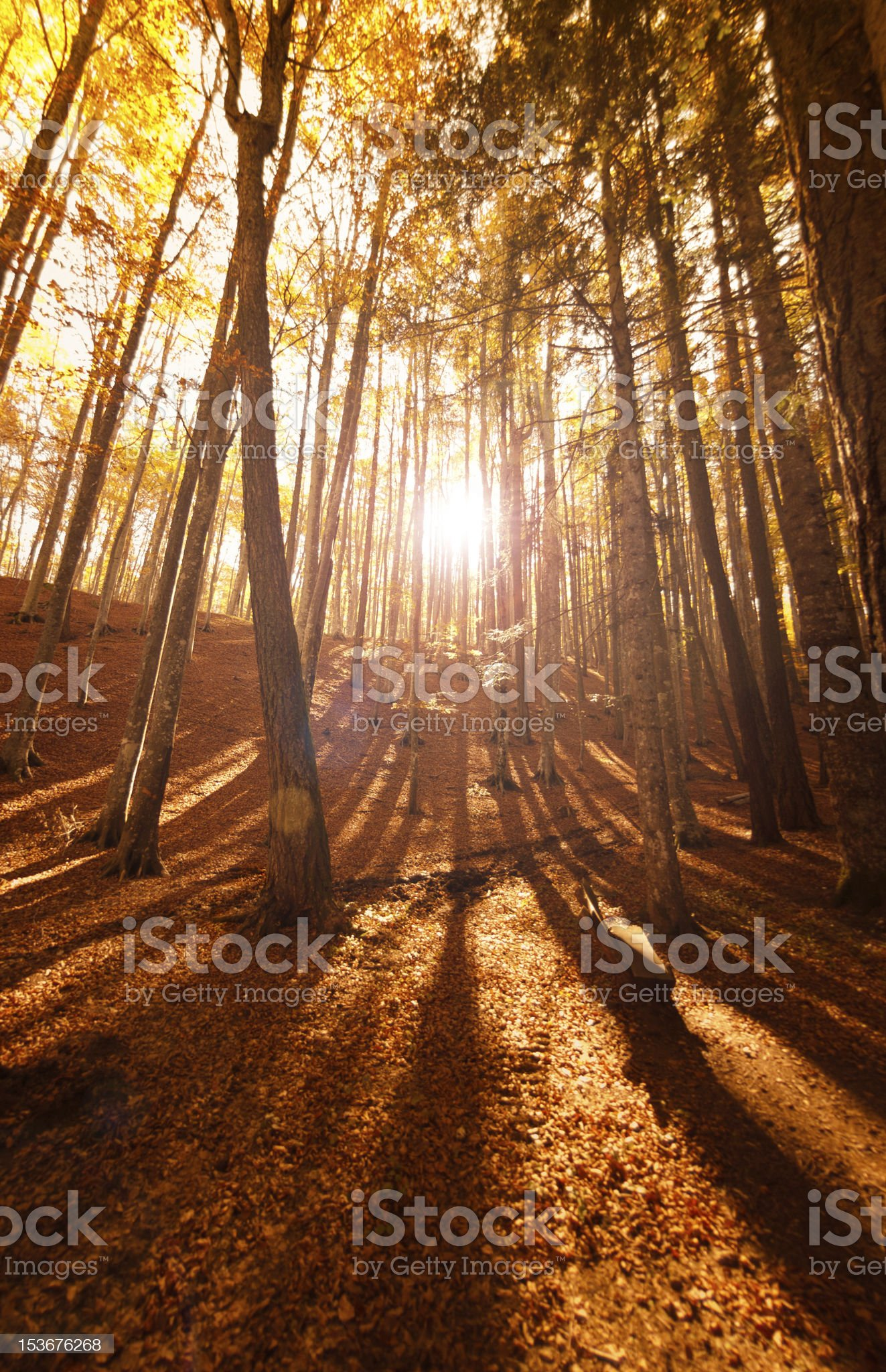 Sunbeams in Scenics Autumn Forest royalty-free stock photo