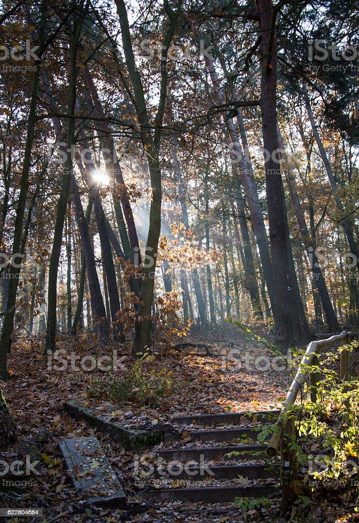 Sunbeams in the forest in Grunewald, Havelhöhenweg, Berlin stock photo