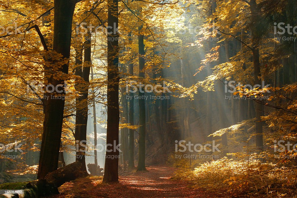 Sunbeams on Footpath through Autumn Forest with Leafs Changing Color stock photo
