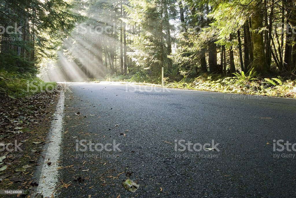 Sunbeams on the Road royalty-free stock photo