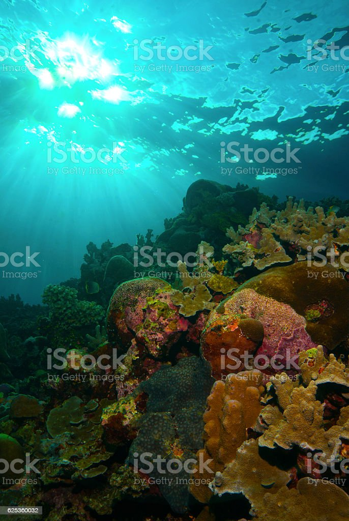 sunbeams over hard coral pinnacle underwater stock photo