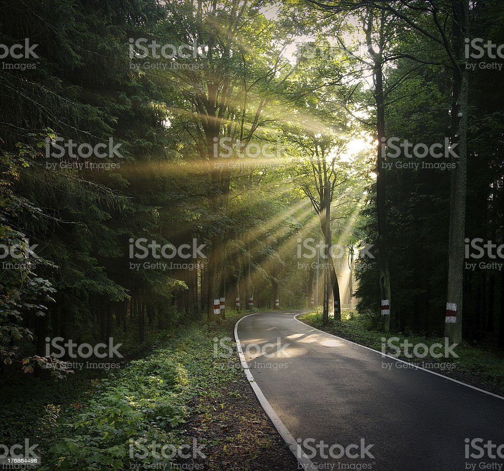 Sunbeams over the road royalty-free stock photo