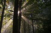 sunbeams penetrating forest