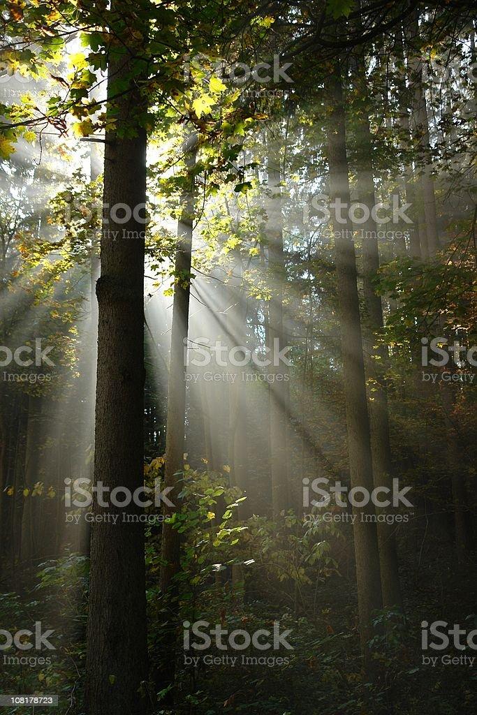 sunbeams royalty-free stock photo