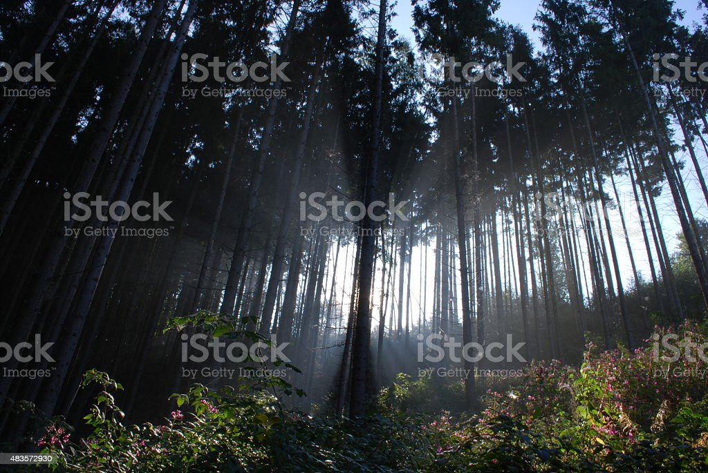 Sonnenstrahlen stock photo