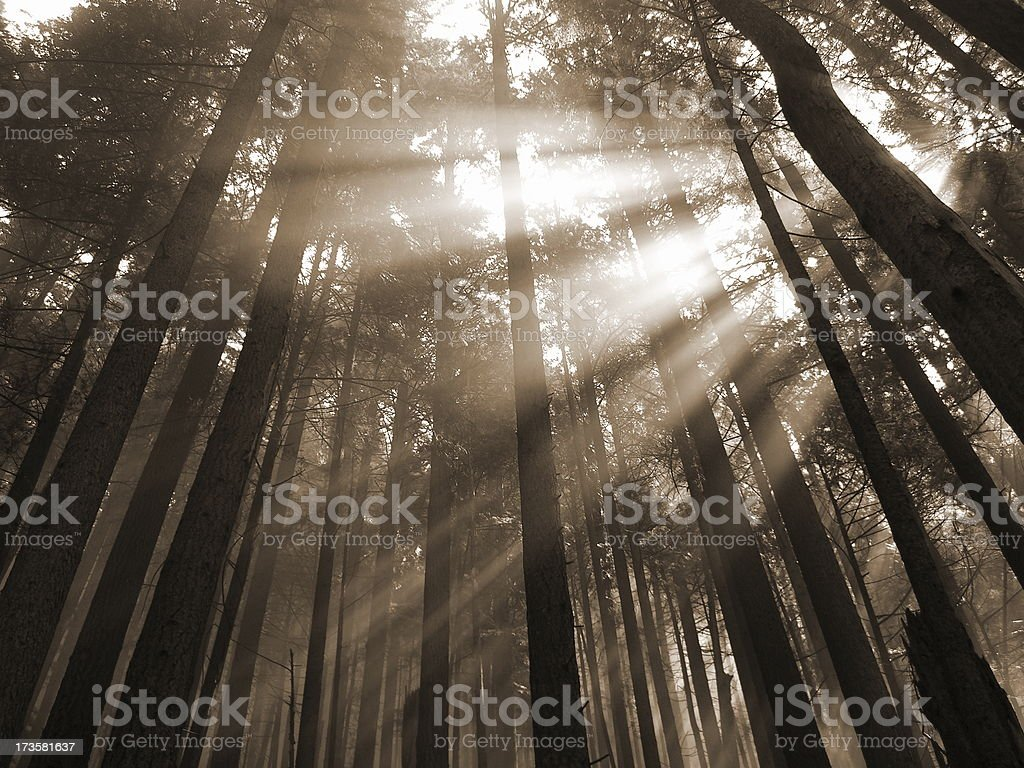 Sunbeams Pouring In royalty-free stock photo