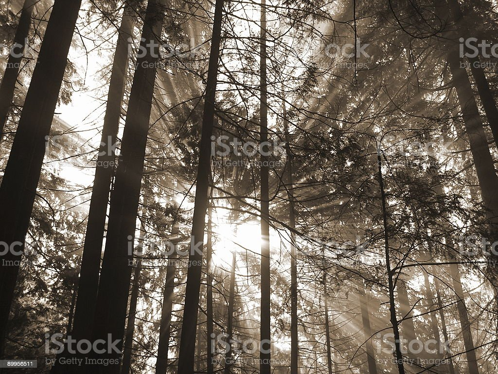 Sunbeams Radiating In All Directions royalty-free stock photo