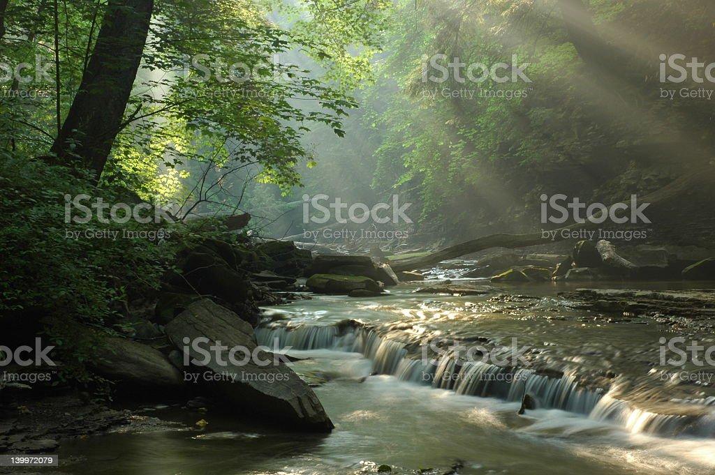 Sunbeams shining through foliage onto a forest stream royalty-free stock photo