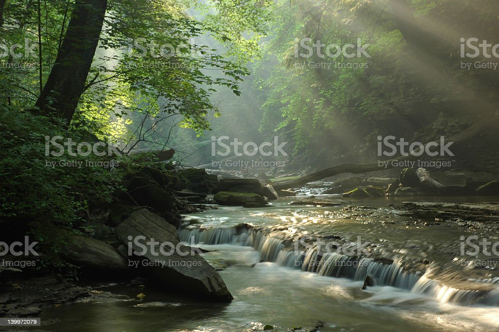 Sunbeams shining through foliage onto a forest stream stock photo