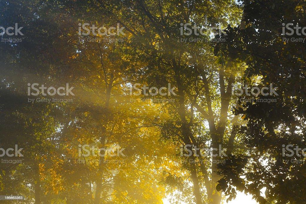 Sunbeams Through Autumn Trees royalty-free stock photo