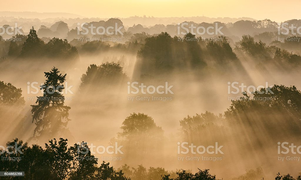 Sunbeams Through Misty Trees At Dawn stock photo