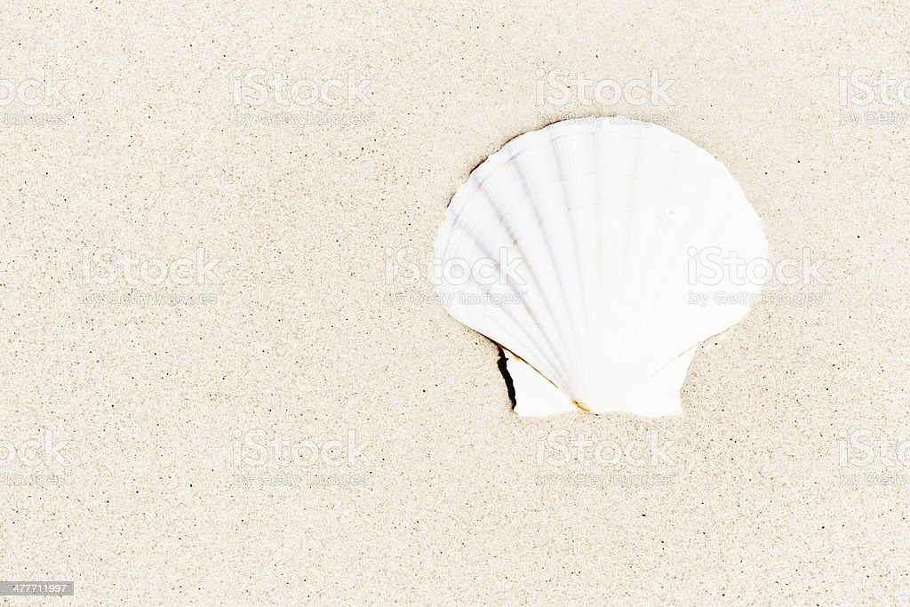 Sun-bleached cockle shell on dry sand with copy space royalty-free stock photo