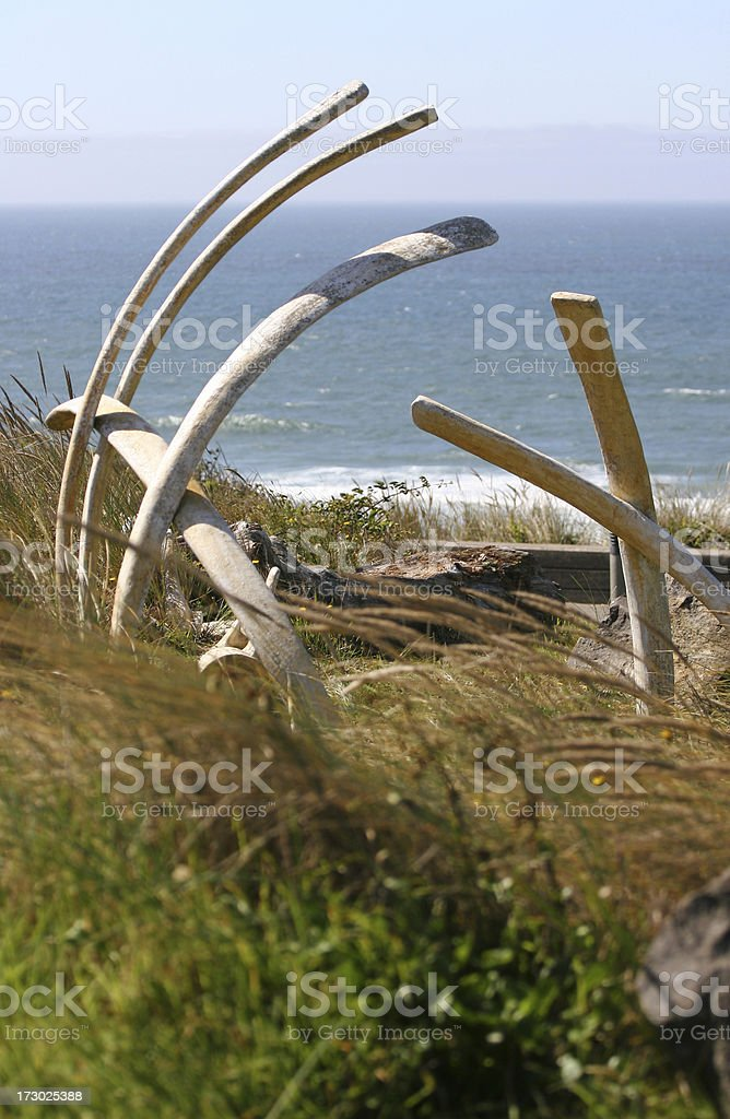 Sun-bleached whale bones in dune grass at the Oregon coast royalty-free stock photo