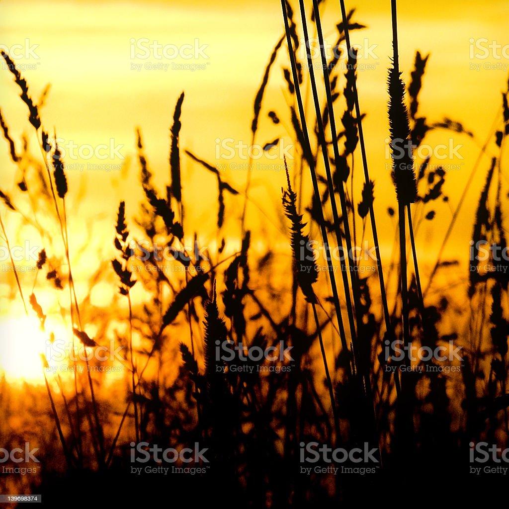 Sundown at the River stock photo