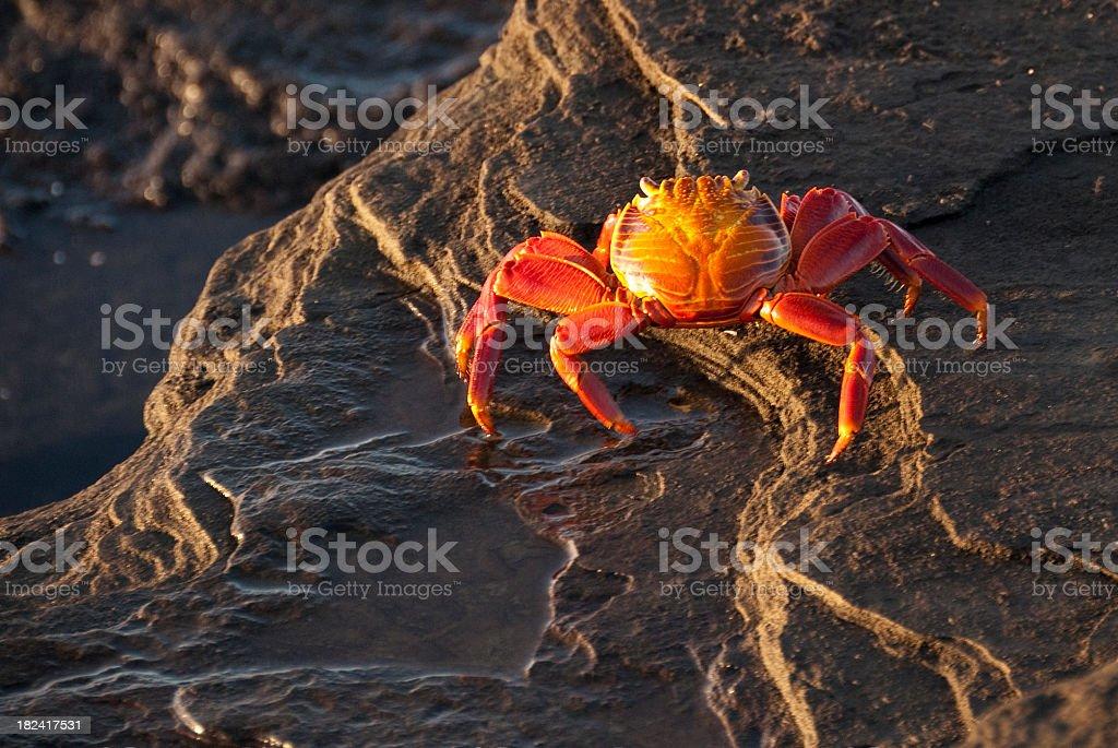 Sundown on Lightfoot crab stock photo