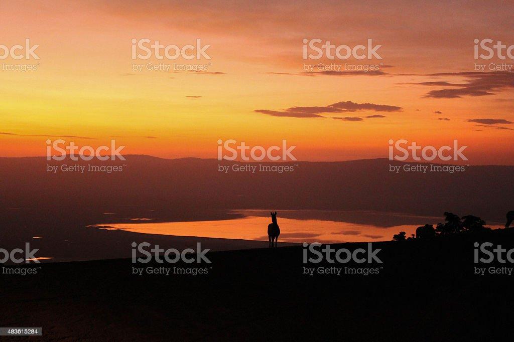Sundown over the Ngorogoro Crater with Zebra in Front stock photo