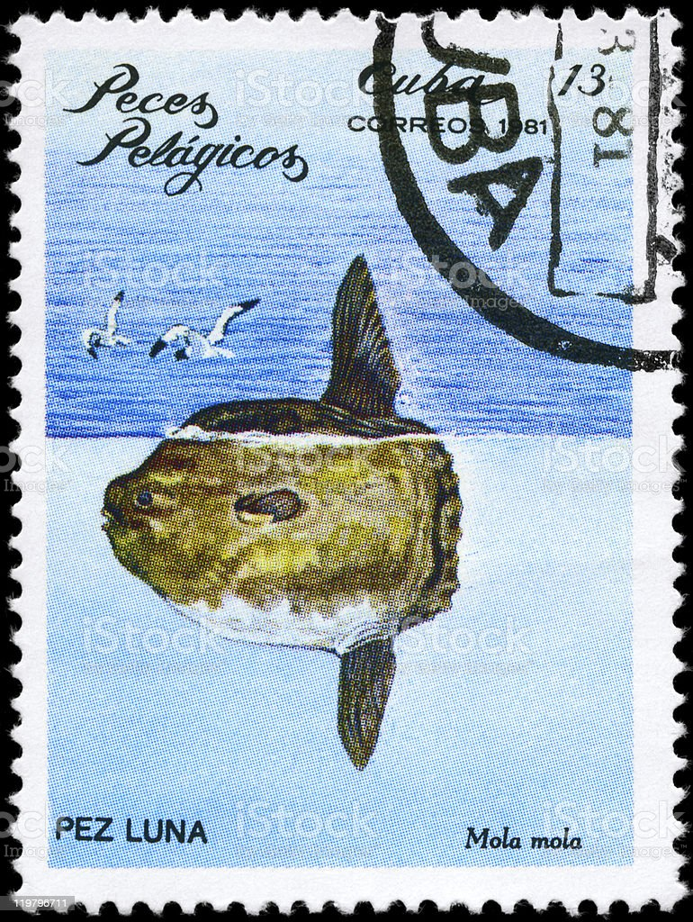 Sunfish stock photo