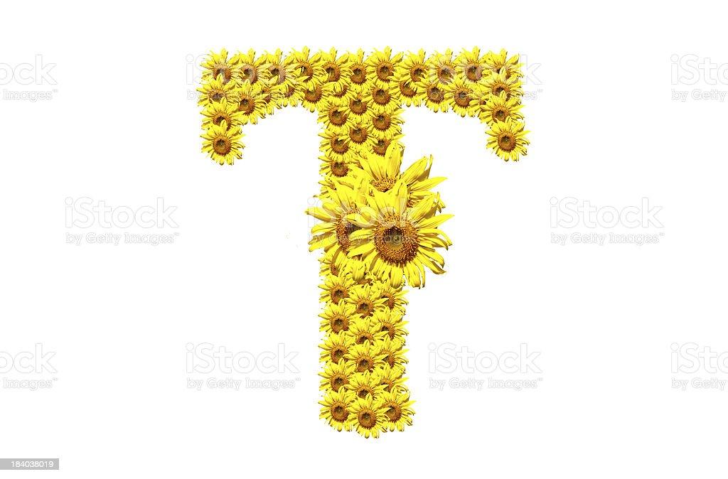 'T' sunflower alphabet royalty-free stock photo