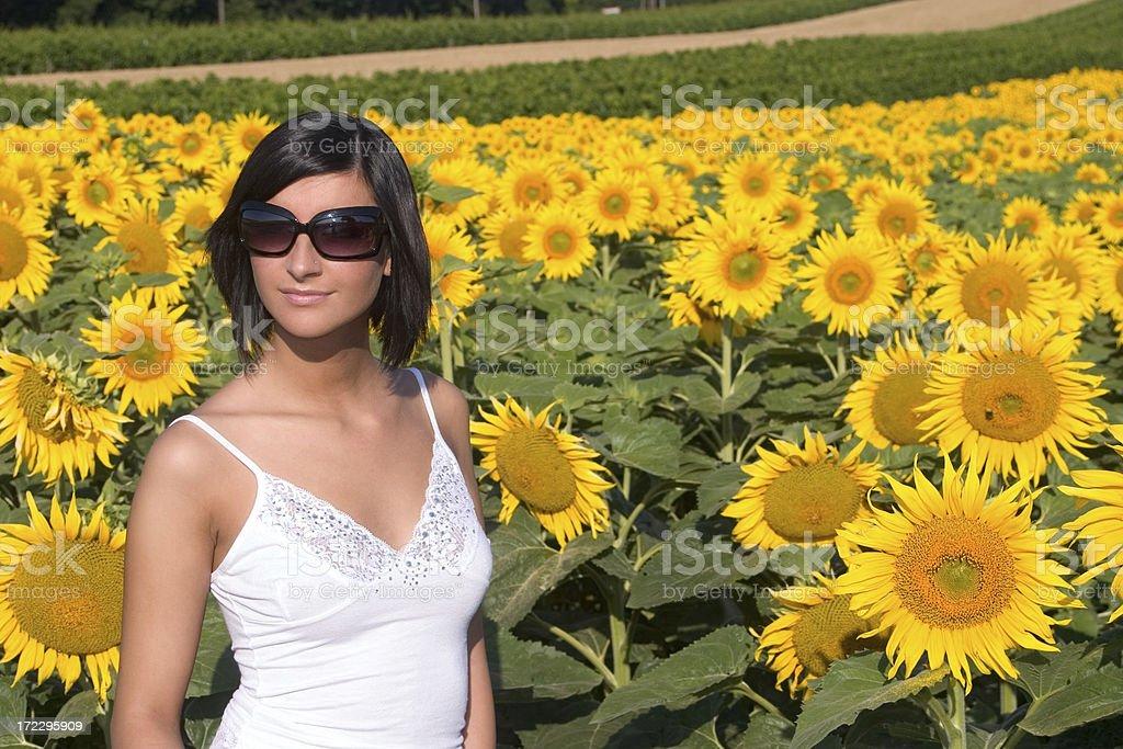 Sunflower beautiful royalty-free stock photo