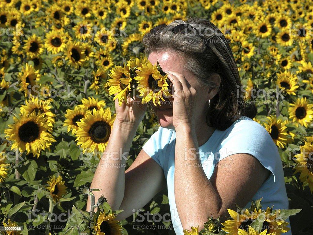 Sunflower Binoculars stock photo