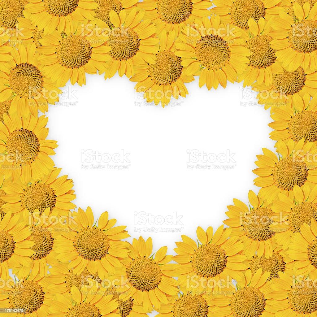 sunflower blank heart. stock photo