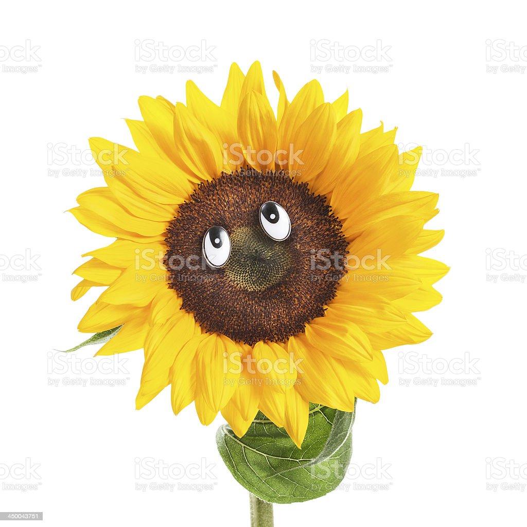 Sunflower Face stock photo