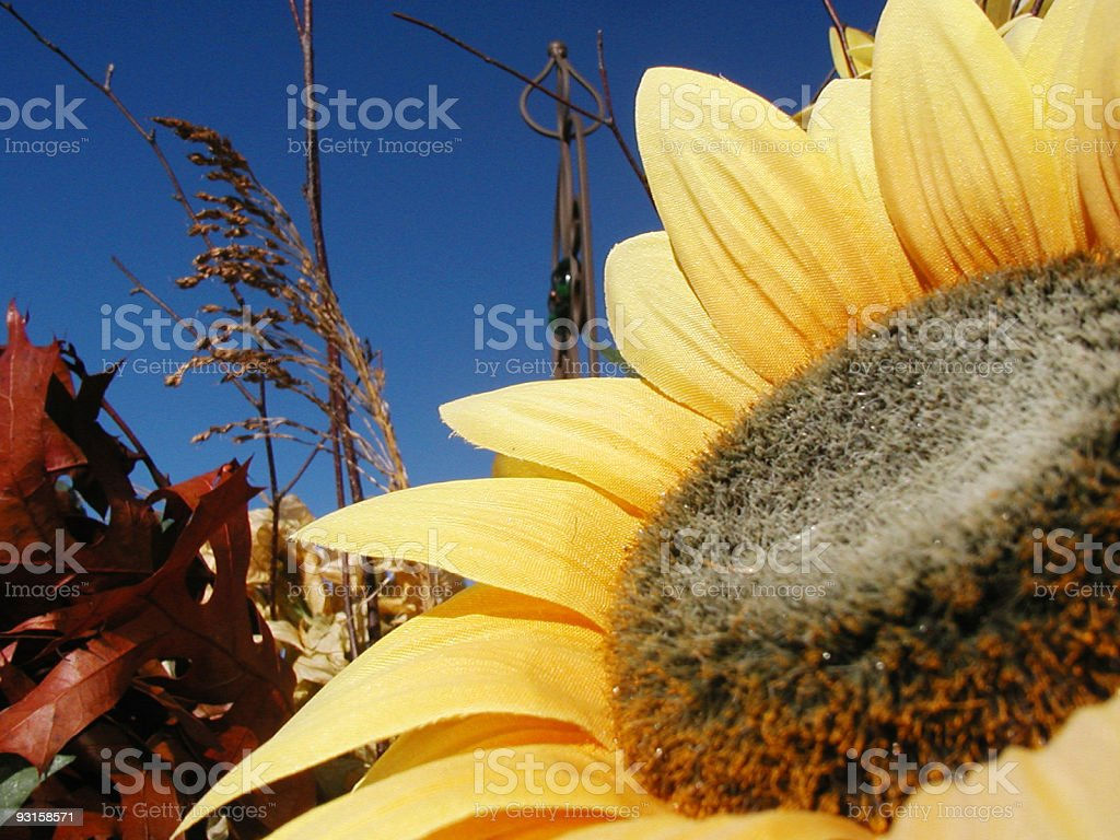 Sunflower - Faux stock photo