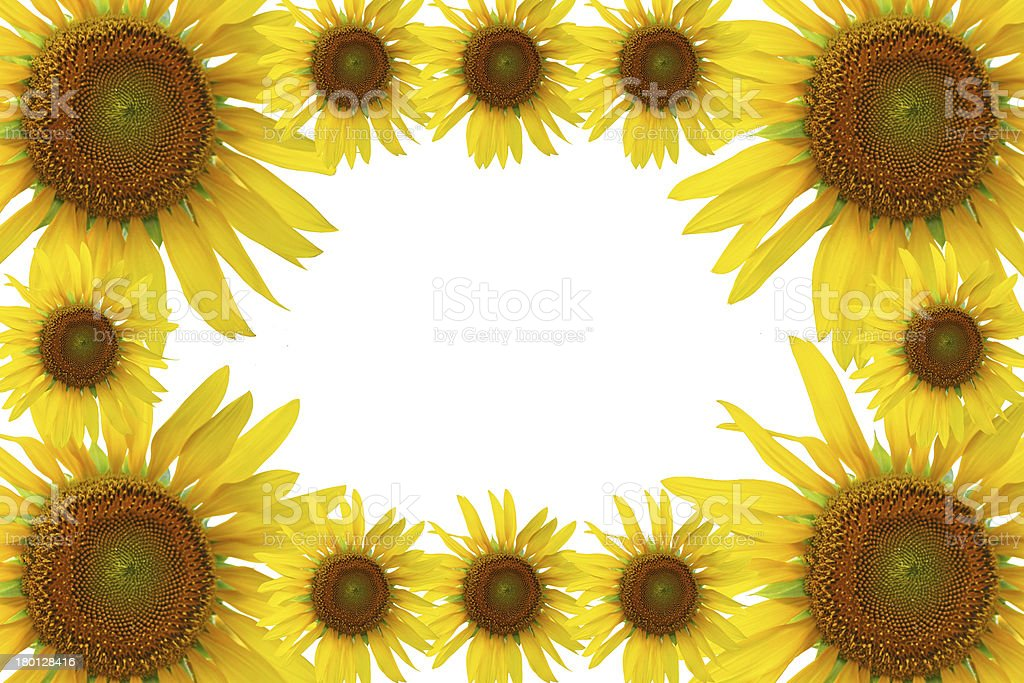 Sunflower frame royalty-free stock photo